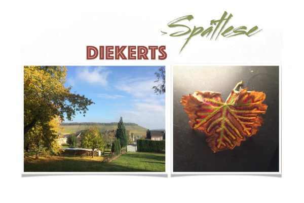 Outdoors and autumn leaf - Diekert's late harvest banner