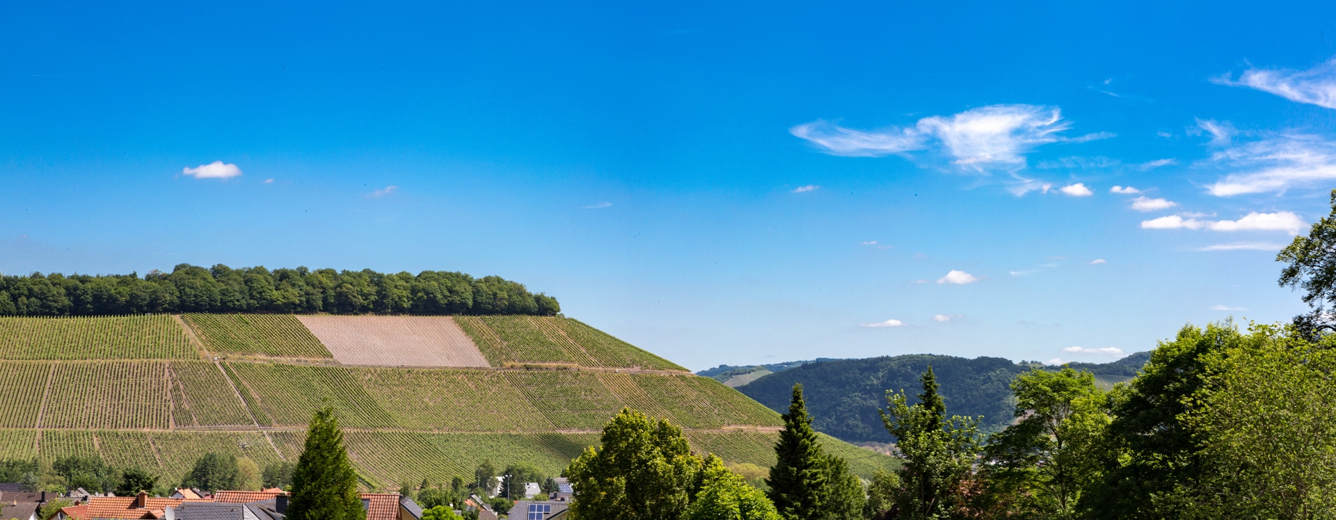 Hill with vineyards