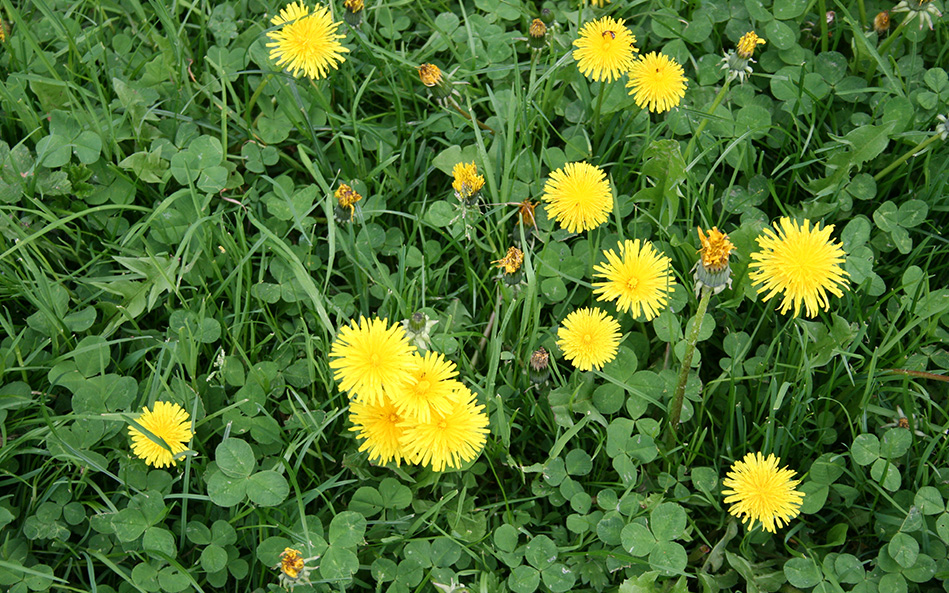 Small yellow flowers on the ground